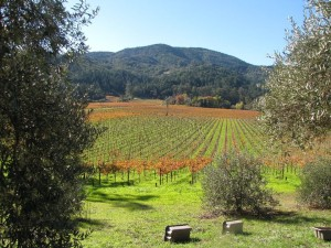 inglenook vineyards