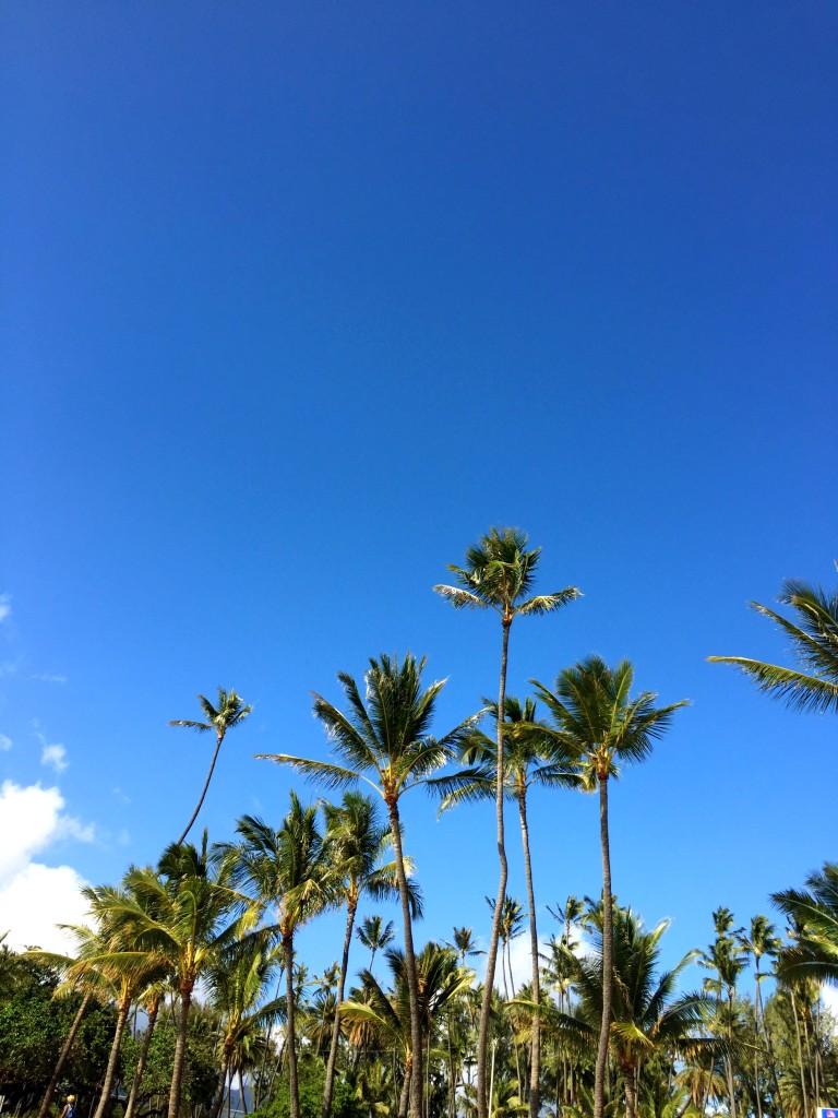 Kaimana Palm Trees